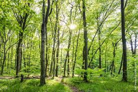 EP backs national CO2 cuts and forestry plans to meet Paris climate targets    News   European Parliament
